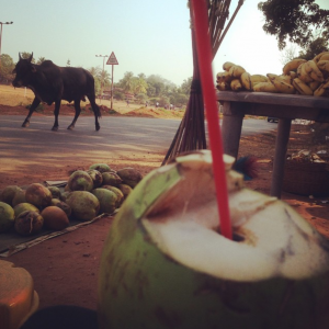 Coconuts and cows...this is India